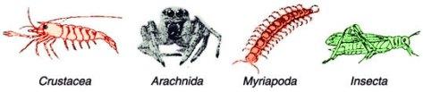 Kelas pada Arthropoda