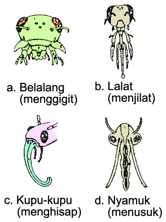Tipe Mulut Insecta