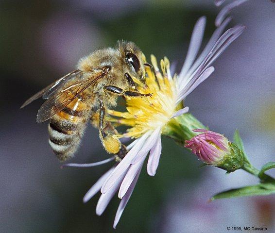 Dan tuhan-mu mewahyukan kepada lebah… (qs. an nahl: 68)